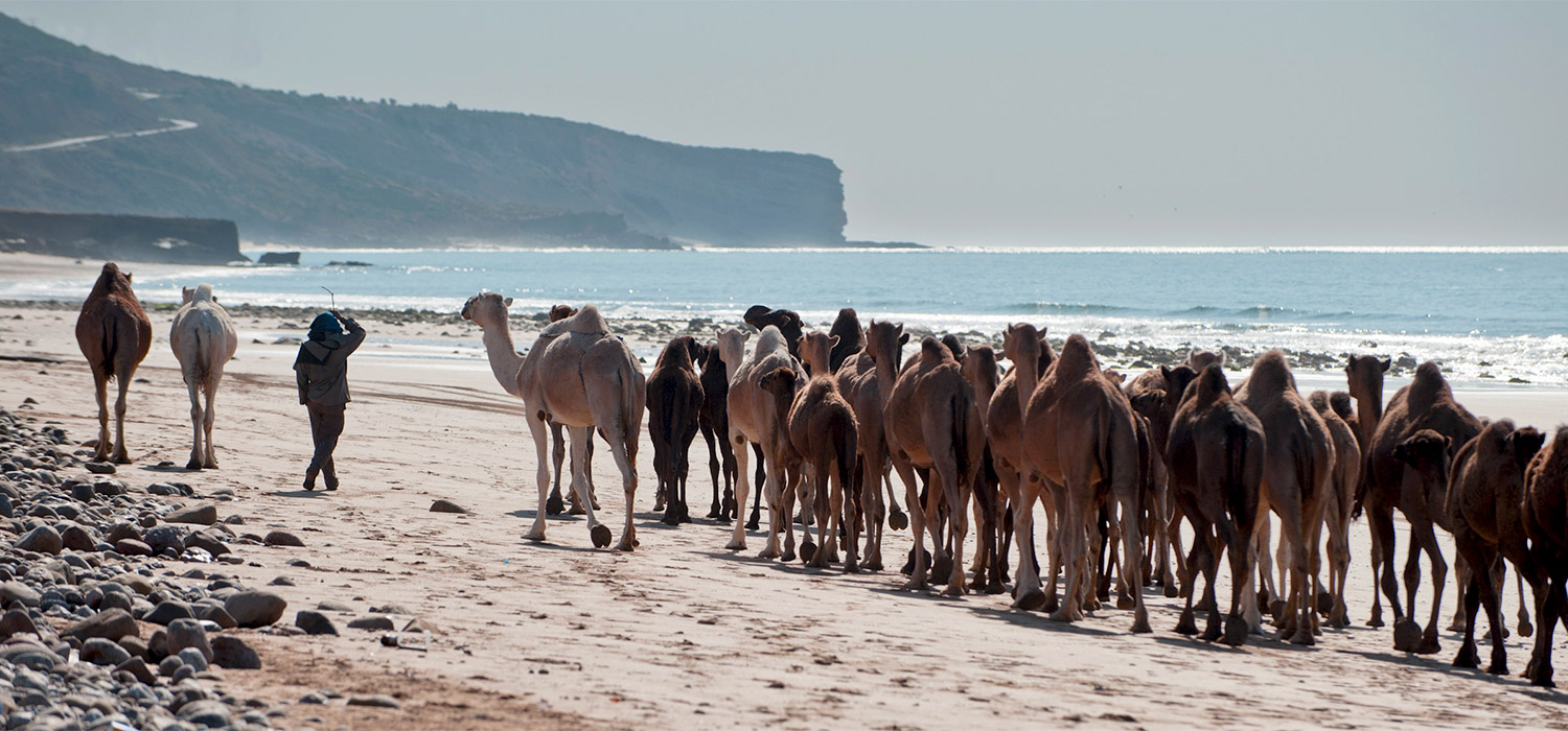 YogaWorks Destination Teacher Training Morocoo Camels