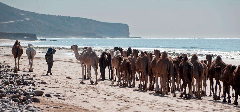 YogaWorks Destination Teacher Training Morocoo Camels